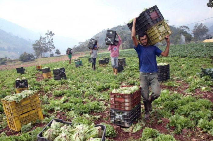 """La crisis de PDVSA es una """"camisa de fuerza"""" para el sector agroindustrial en Venezuela"""